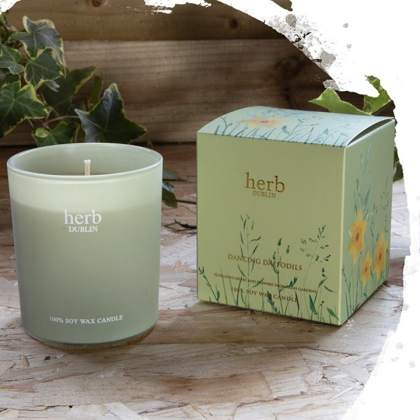 Herb Dublin Dancing Daffodils Boxed Candle